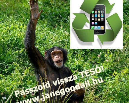 Passzold vissza TESÓ! – avagy mobiltelefonnal a csimpánzokért és a gorillákért